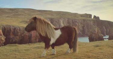 Dancing Pony Reklamı